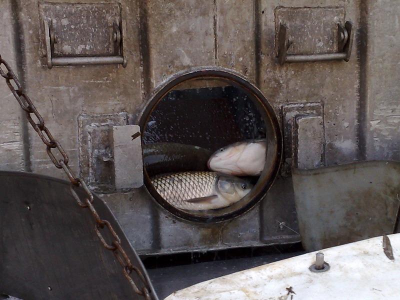 Folytatódik a horgászvizek halasítása