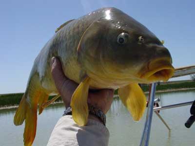 Mit él át a hal?