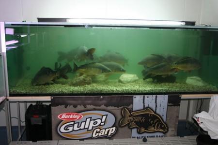 A GULP! Carp termékek hosszas labor tesztek után kerültek ki egyáltalán a vizek partjára, ahol újabb 2 évig tesztelték azokat