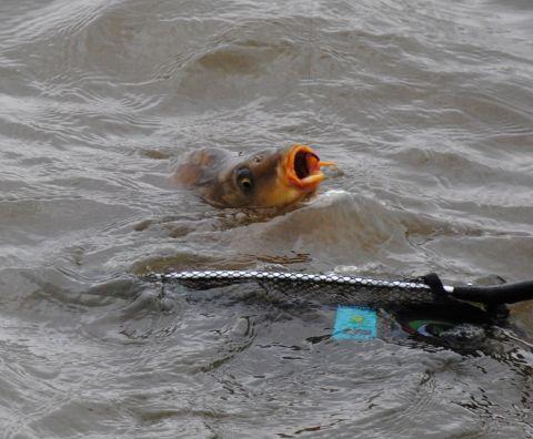 IV. SZVMSZK megyei horgászverseny 2012