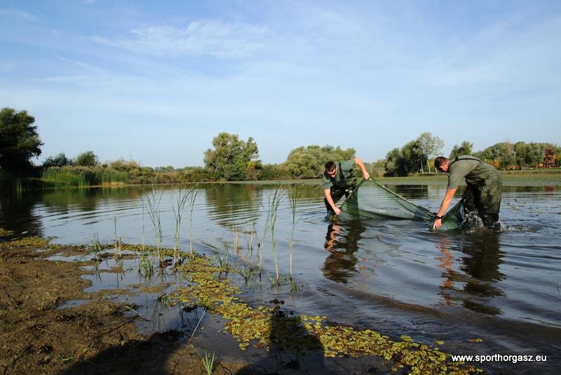 Szeptemberi ivadékhelyzet a Füredi-Holt-Tiszán