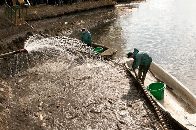 II. Hortobágyi Lehalászási Ünnep – Október 13-14 Elep