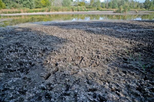 Szárazság, vízhiány, halpusztulás – HBMI Horgász Szövetség tájékoztatása
