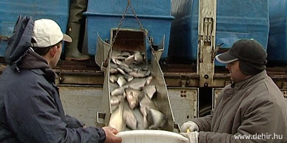 Jó világ jön Balmazújvároson a horgászokra