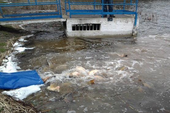 Telepítés a Szövetség által kezelt vizekbe 2013/03/25