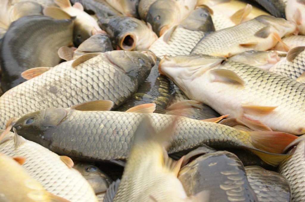 Hajdú-Bihar Megyei Horgász Szövetség tájékoztatója (március)