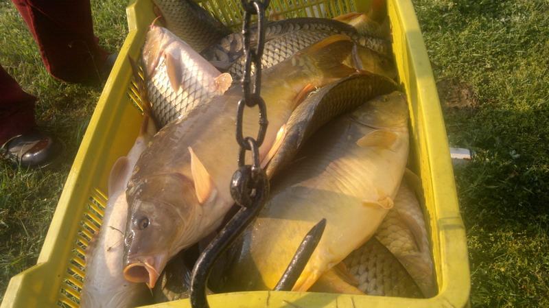 Telepítés a Pacsirtás horgásztóba 2013-04-23