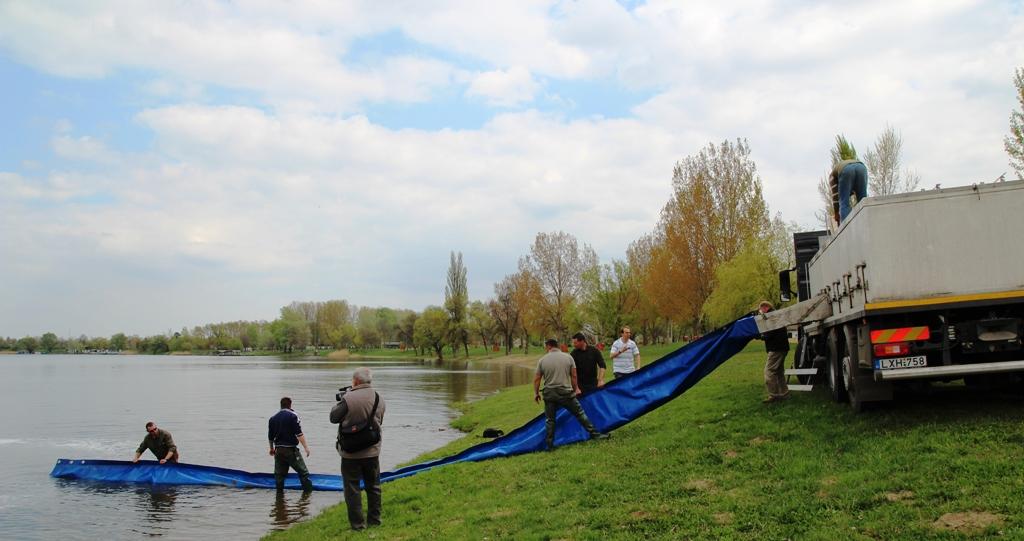 Háromnyaras ponty telepítés a Tisza tóba