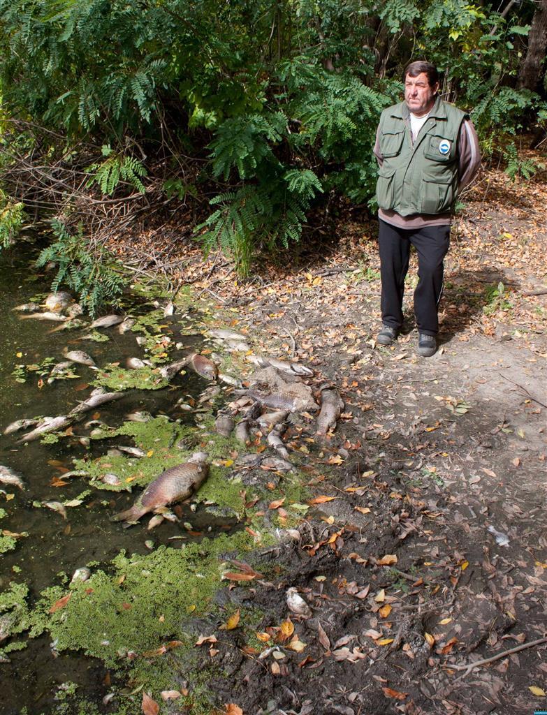Rothadó halak a holtágon
