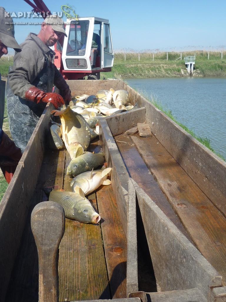 Fotók a lehalászásról telepítésről