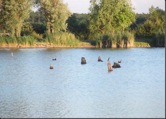 Mézeshegyi-tó az aszály szorításában