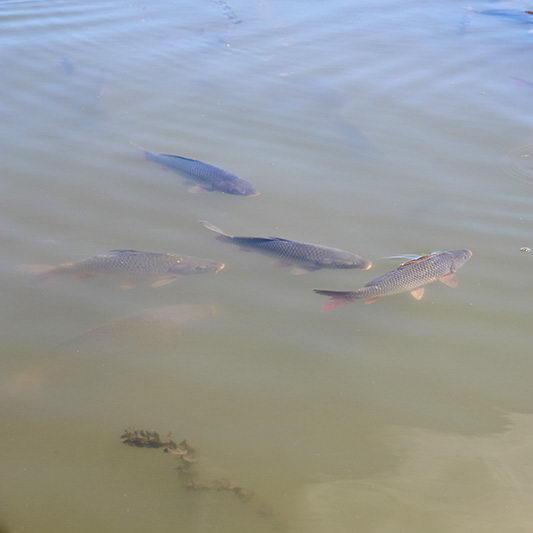Őszi telepítés a megyei horgászvizekbe