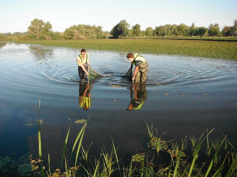 Nyár végi ivadékhelyzet a Tisza tónál
