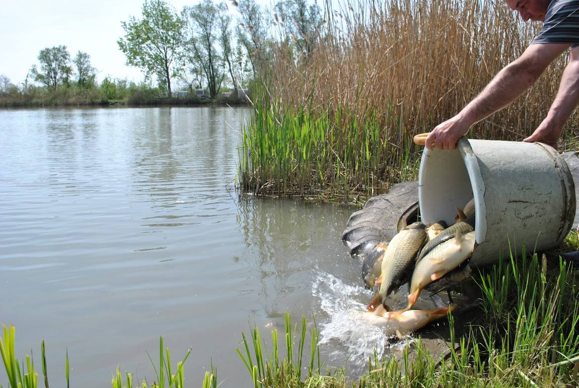Telepítés a Kajánsziki horgásztóba