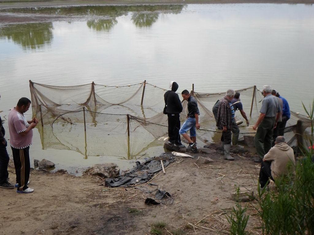 Halmentő halászat a Fancsika I-es tavon