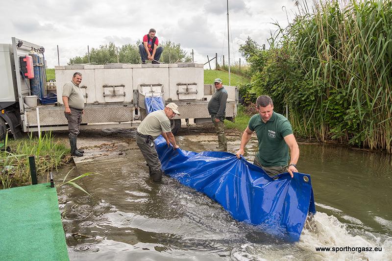 10 tonna halat telepítenek a Tisza tóba