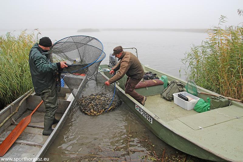 Eredményes hét a törpeharcsa gyérítésben a Tisza tavon