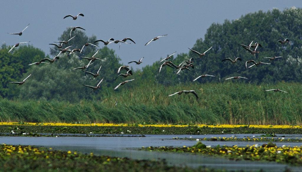 Megyei szövetségünk kirándulást szervez a Tisza tóra