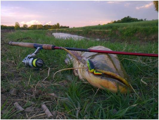 26 órás páros harcsafogó verseny 2016 – Látóképi víztározó (versenykiírás)