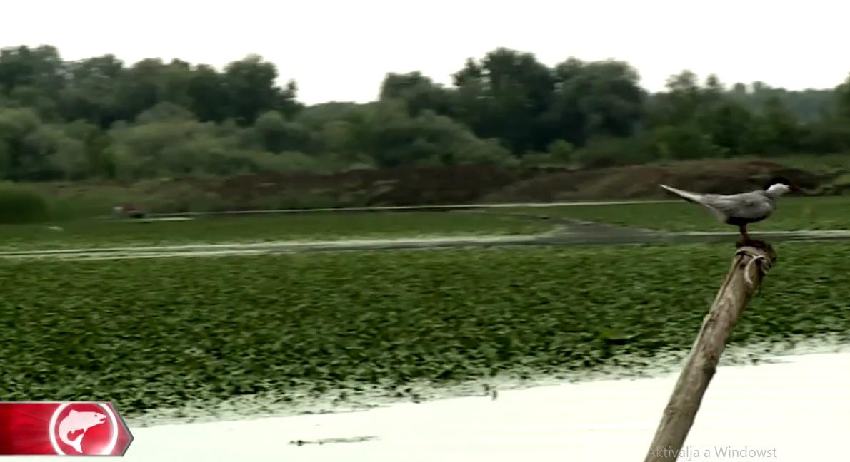Egy teljes adás a Tisza tóról
