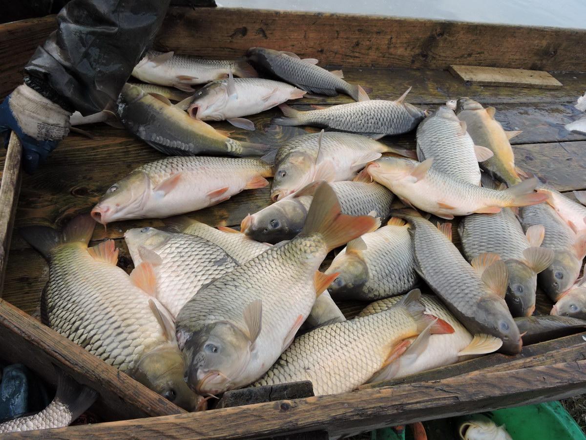 Pontytelepítés a Tüskevár horgásztóba
