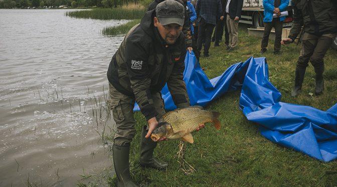 960 mázsa ponty került a Tisza tóba